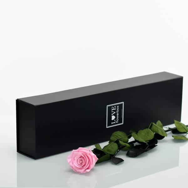 Flowerbox Lang | Classic | Rosen Bridal Pink (Hellrosa)