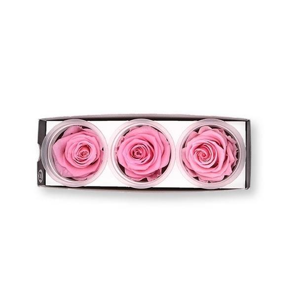 Rosen konserviert | bridal pink | 6cm | 3er Pack
