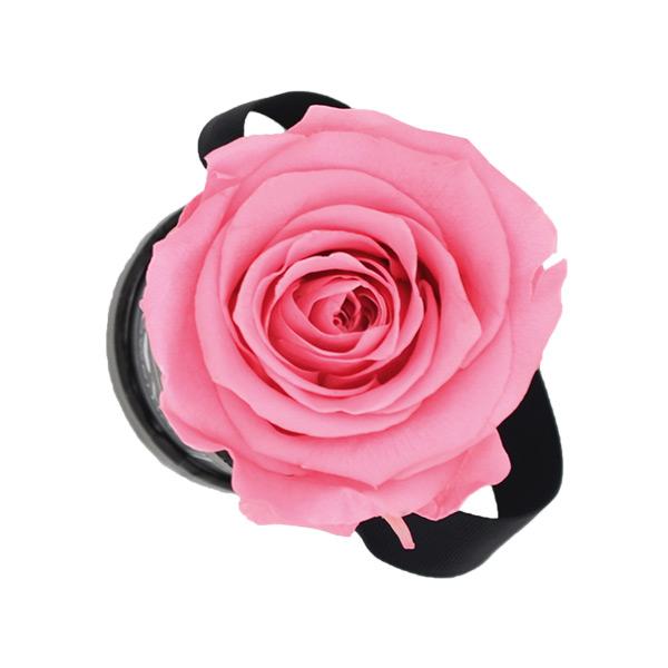 Modern gold | Mini | Baby Pink (Rosa)
