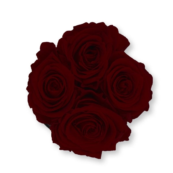 Rosenbox Infinity Rosen bordeaux | Flowerbox | Blumenbox | S Modern white