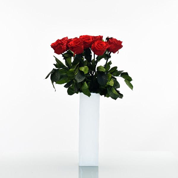 Langstiel Set | Vibrant Red (Rot) | 5 Stück