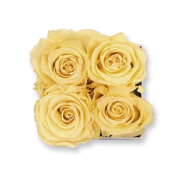 Rosenbox Infinity Rosen aprikot | Flowerbox eckig | S Modern white