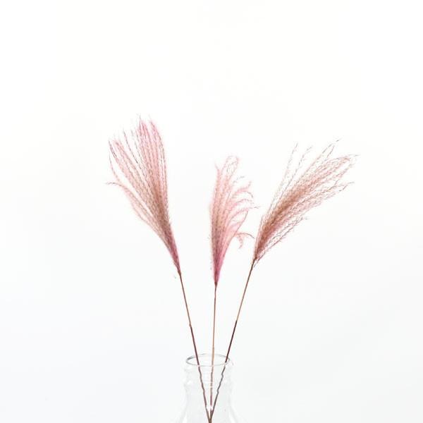 Trockenblumen Miscanthus (Chinaschilf) altrosa, 3 Stiele