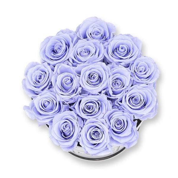 Modern | Large | Cool Lavender (Lavendel)