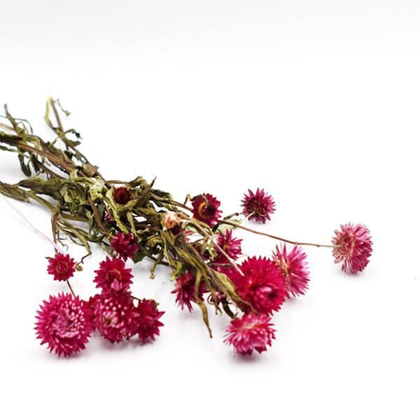 Love_dried_flowers_Trockenblumen_getrocknete_Blumen_strohblume_beere.jpg