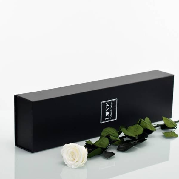 Flowerbox Lang   Classic   Rosen Pure White (Weiss)
