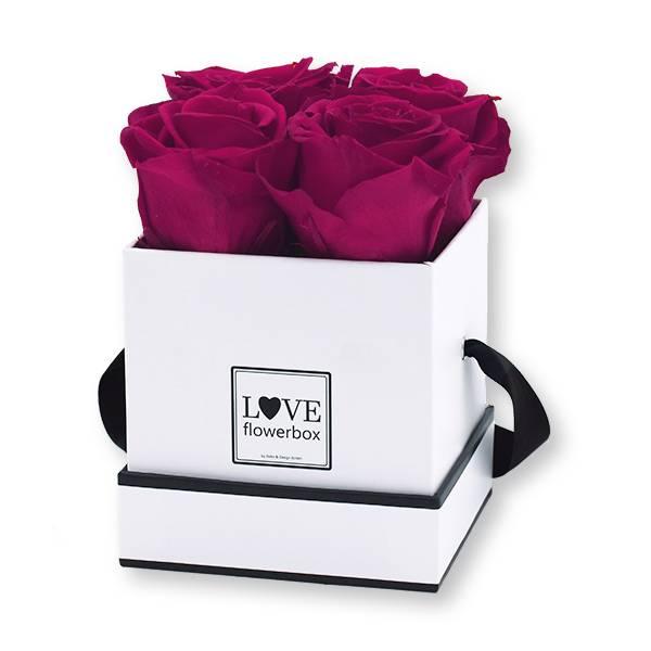 Flowerbox Modern | Small | Rosen Raspberry (Himbeere)