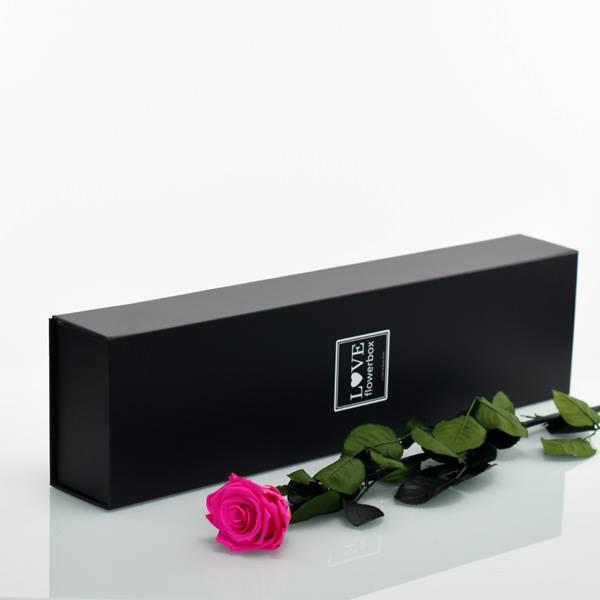 Flowerbox Lang | Classic | Rosen Hot Pink