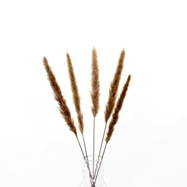 Trockenblumen Palmwedel naturbraun, 5 Stiele