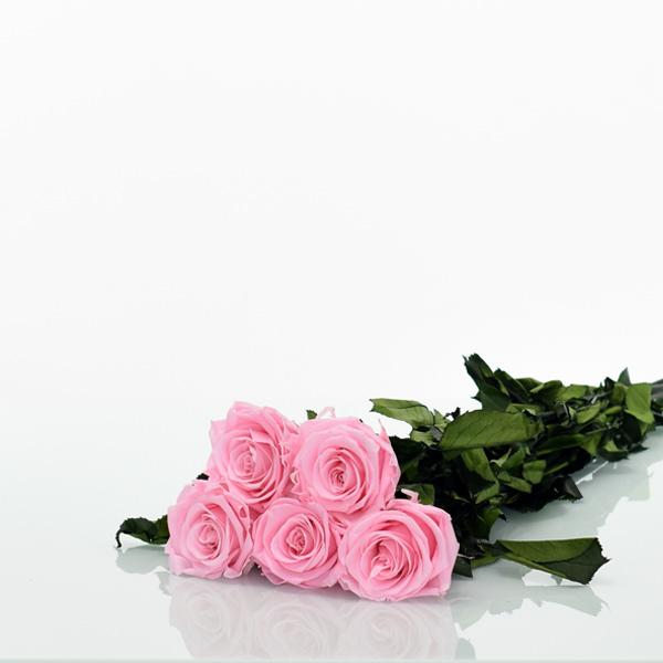 Rosenstrauß | Blumenstrauß mit 5 langstieligen Infinity Rosen | rosa