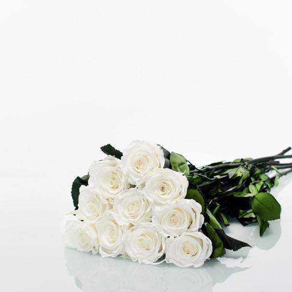 Langstiel Set | Pure White (Weiss) | 10 Stück