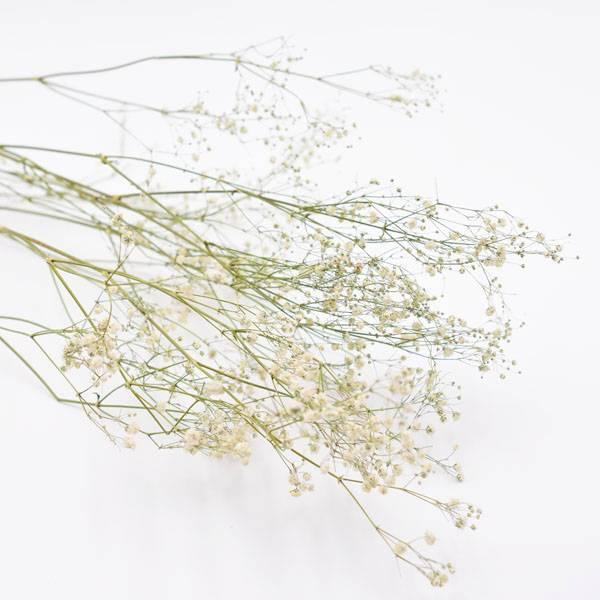 Love_dried_flowers_Trockenblumen_getrocknete_Blumen_Gypsophila_Schleierkraut_weiss.jpg