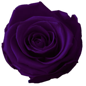 Dunkellila (Lilac)
