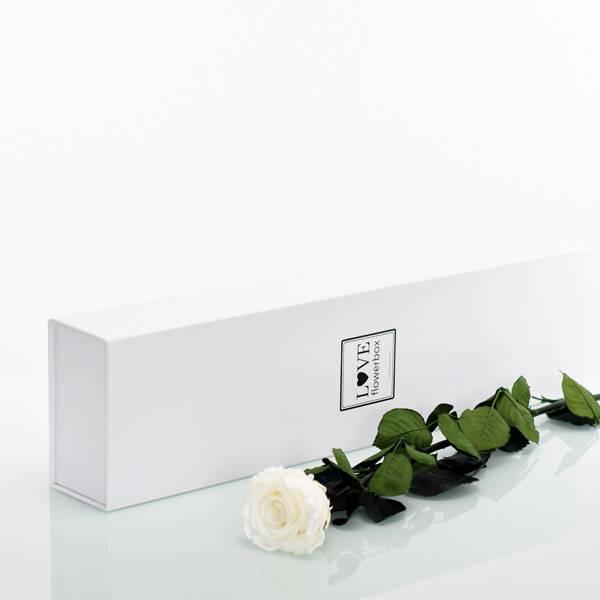 Flowerbox Lang | Classic | Rosen Pure White (Weiss)