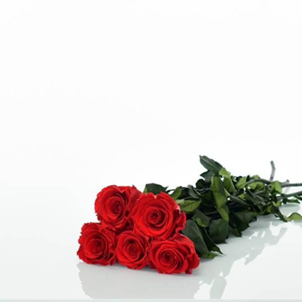 Love_flowerbox_Rosenbox_5_Infinitiy_Rosen_langstielig_Strauss_liegend.jpg