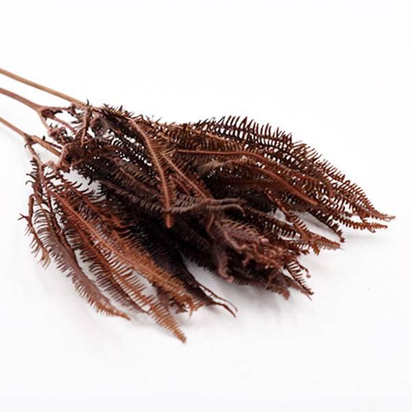 Trockenblumen Regenschirmfarn kaufen stabilisiert   Braun   3 Stiele