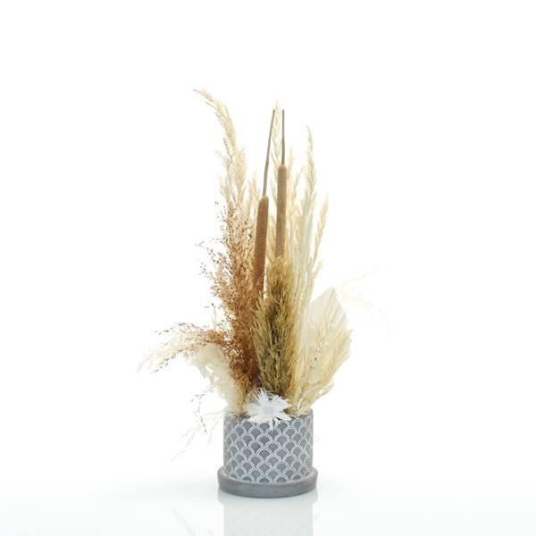 Trockenblumen Gesteck | Zement Topf grau | Boho Liebe M | weiss-natur-braun | Pampasgras, Palmspear, Schilfkolben, Caplume