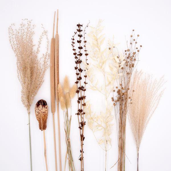 Trockenblumen Set Braun
