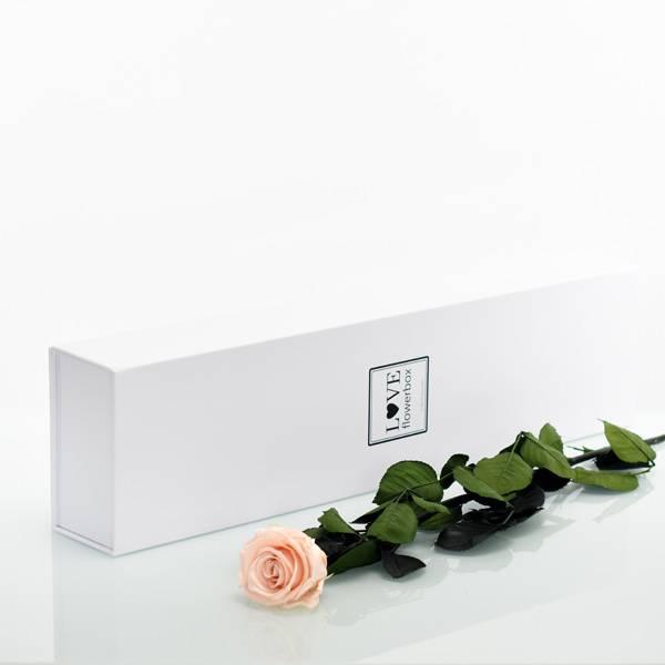 Flowerbox Lang | Classic | Rosen Pastell rosa (Pastellrosa)