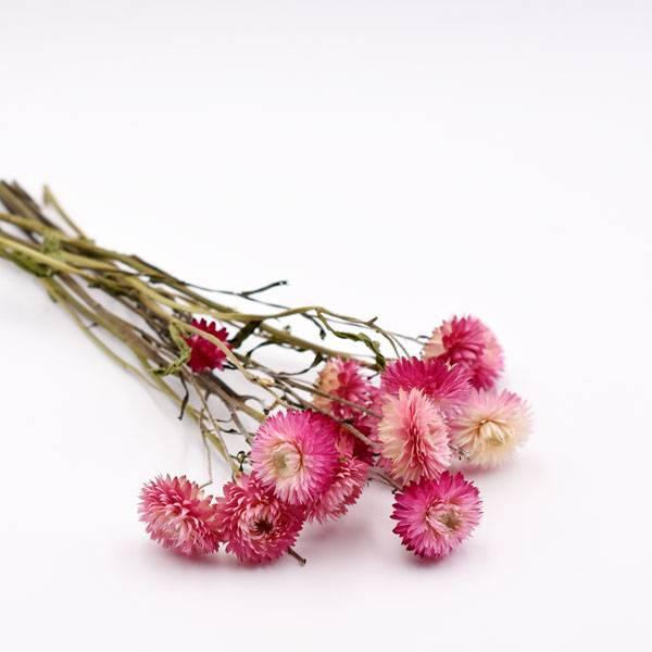 Love_dried_flowers_Trockenblumen_getrocknete_Blumen_strohblume_pink.jpg