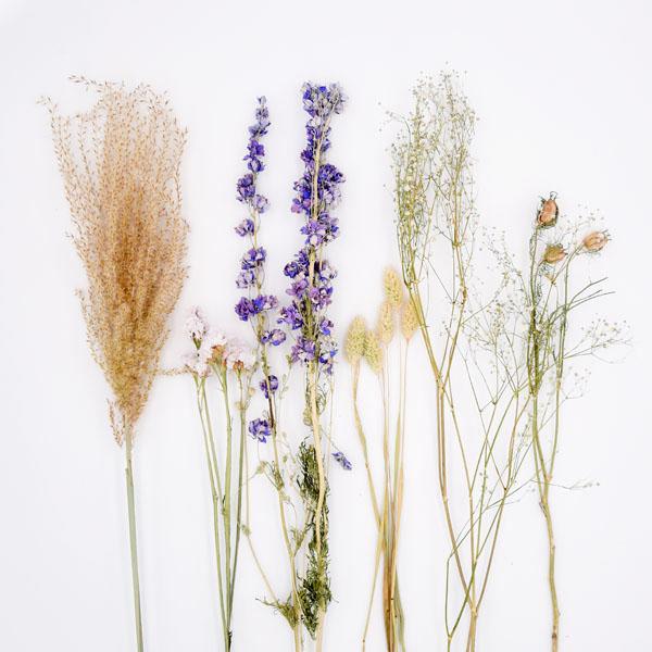 Trockenblumen Set Blau