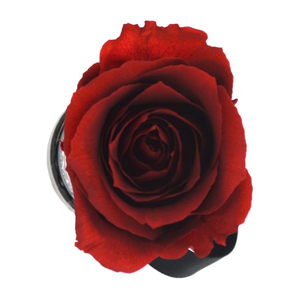 Rosenbox Infinity Rosen rot | Flowerbox | Blumenbox | XS Modern w gold