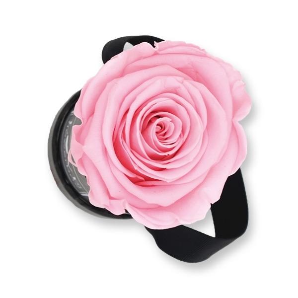 Modern | Mini | Bridal Pink (Hellrosa)