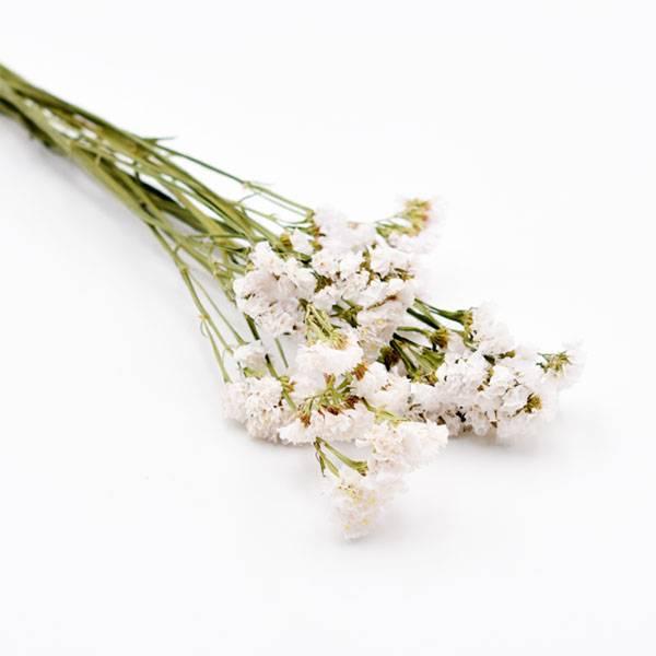 Love_dried_flowers_Trockenblumen_getrocknete_Blumen_Statice_weiss_5_Stiele_2.jpg
