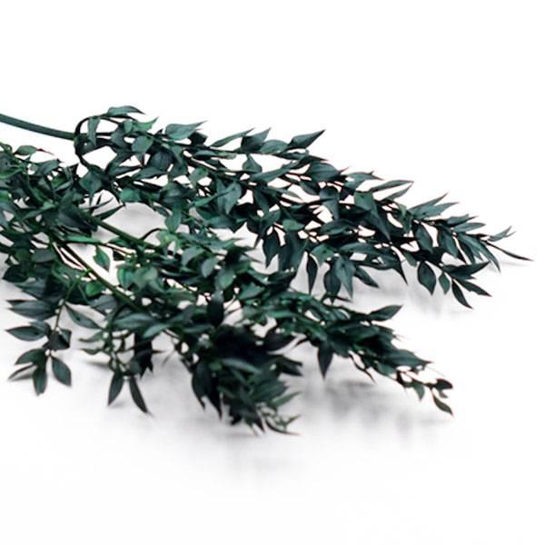 Trockenblumen Ruskus kaufen stabilisiert | Grün | 2 Stiele