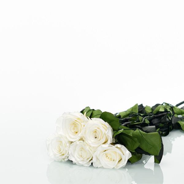 Langstiel Set | Pure White | 5 Stück
