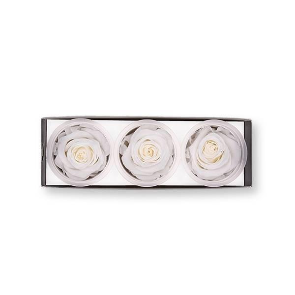 Rosen konserviert | pure white | 6cm | 3er Pack