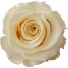 bedeutung der rosen
