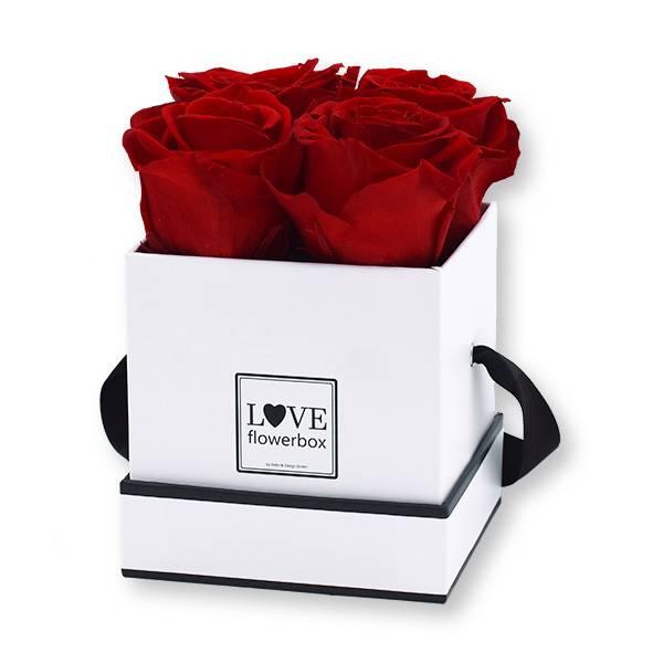 Flowerbox Modern | Small | Rosen Vibrant Red (Rot)