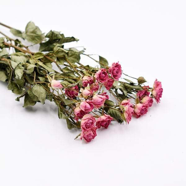 Love_dried_flowers_Trockenblumen_getrocknete_Blumen_Rosen_verzweigt_pink_5_Stiele.jpg