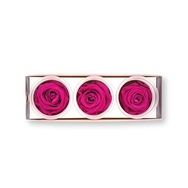 Rosen konserviert | hot pink | 6cm | 3er Pack