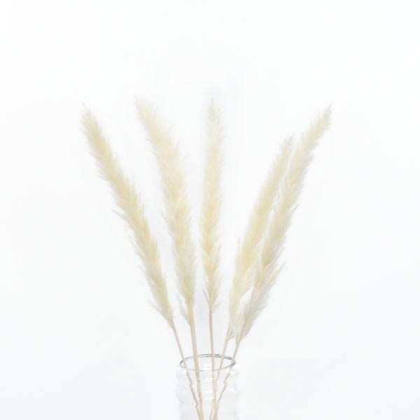 Trockenblumen Palmwedel weiss, 5 Stiele