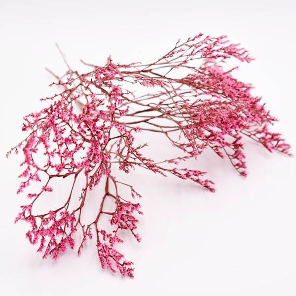 Love_dried_flowers_Trockenblumen_getrocknete_Blumen_Statice_Tatarica_pink_3_stiele.jpg
