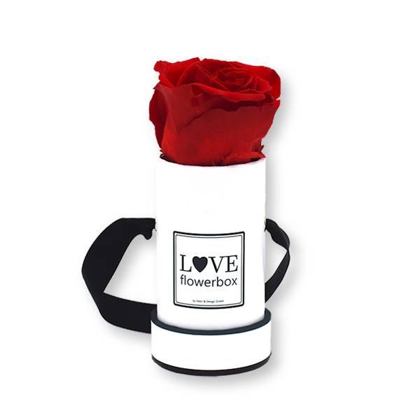 Flowerbox_rosenbox_blumenbox_rund_weiss_Mini_infinity_Rosen_vibrant_red_rot