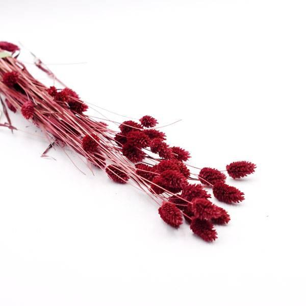 Love_dried_flowers_Trockenblumen_getrocknete_Blumen_Phalaris_burgund_25_Stiele.jpg