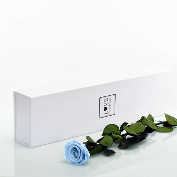 Love_Flowerbox_Langbox_weiss_Infinity_Rose_langstielig_baby_blue_hellblau.jpg