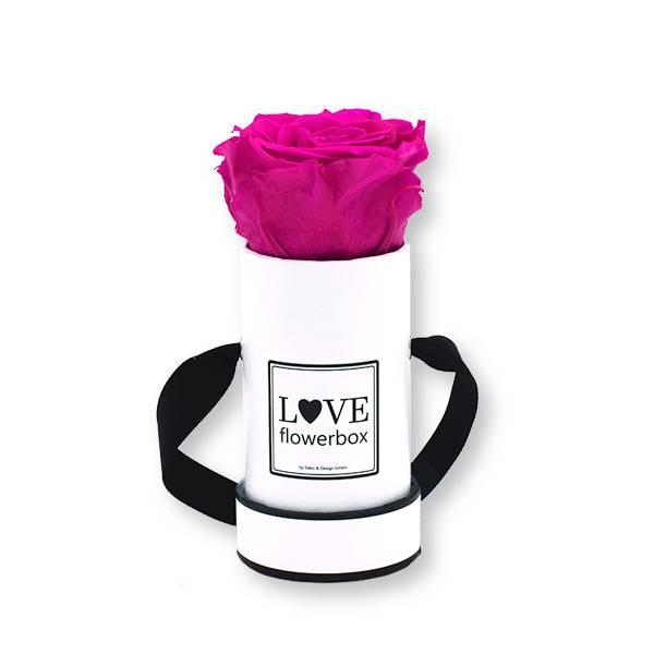Flowerbox_rosenbox_blumenbox_rund_weiss_Mini_infinity_Rosen_hotpink_pink.jpg