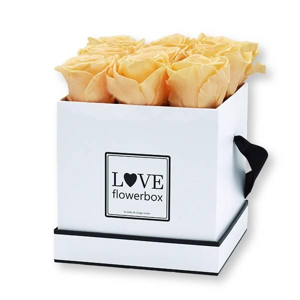 flowerbox_rosenbox_blumenbox_eckig_Medium_weiss_Infinity_Rosen_peach_aprikot_pfirsich.jpg
