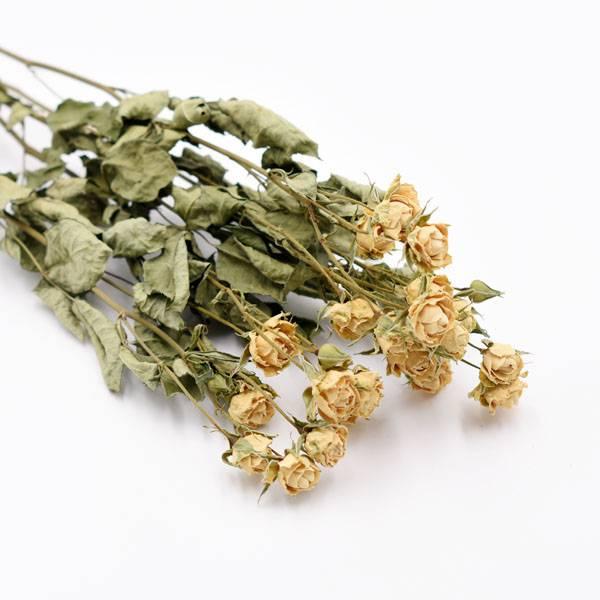 Love_dried_flowers_Trockenblumen_getrocknete_Blumen_Rosen_Spray_weiss_5_Stiele.jpg