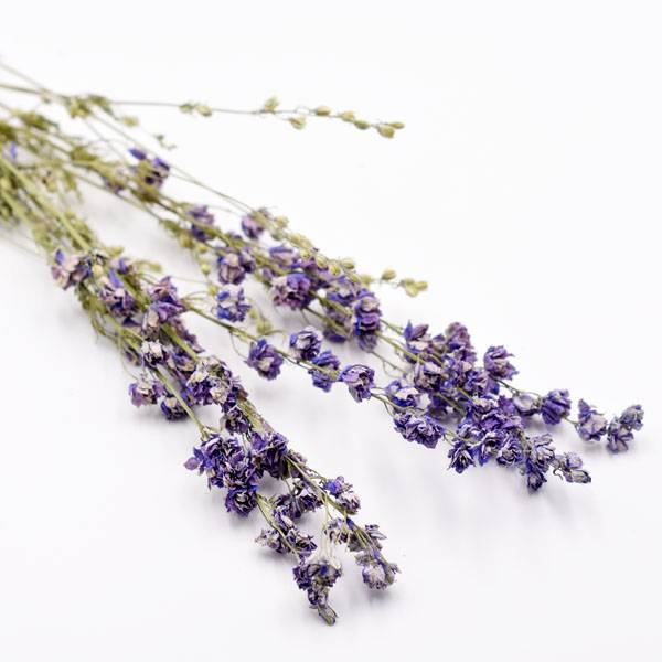 Love_dried_flowers_Trockenblumen_getrocknete_Blumen_Delphinium_Rittersporn_blau_5_stiele.jpg
