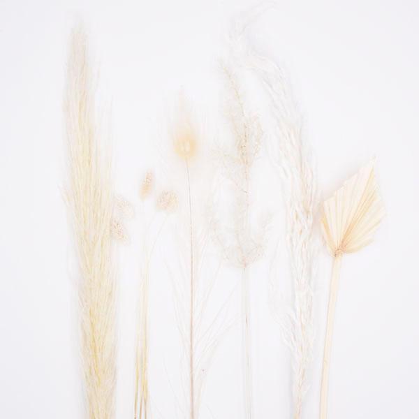 Trockenblumenstrauß Mix   Set Weiss   Trockenblumen weiss-ivory-natur