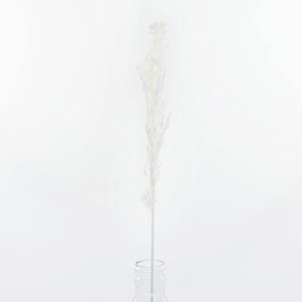 Trockenblumen Eryanthus weiss, 1 Stiel