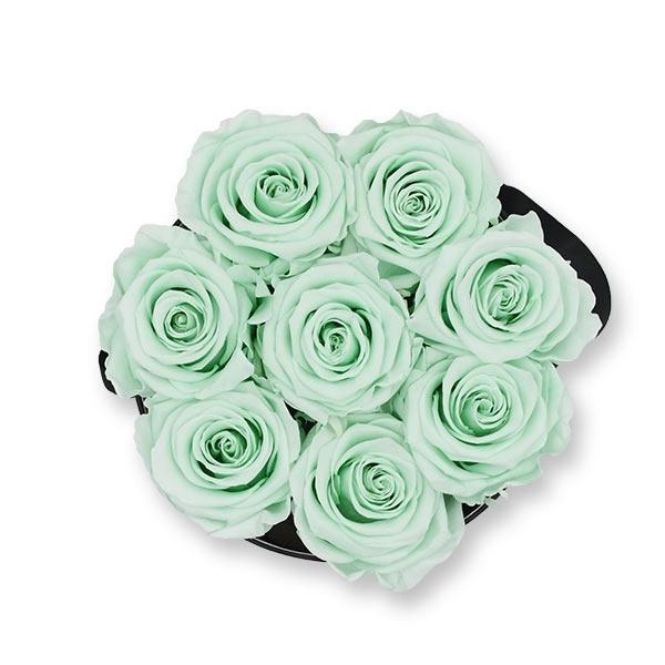 Modern | Medium | Minty Green (Mint)
