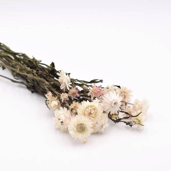 Love_dried_flowers_Trockenblumen_getrocknete_Blumen_strohblume_weiss_creme.jpg