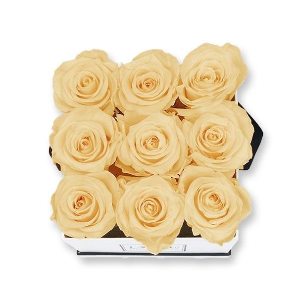 Rosenbox Infinity Rosen aprikot | Flowerbox eckig | M Modern white
