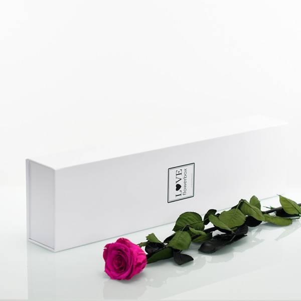 Flowerbox Lang   Classic   Rosen Raspberry (Himbeere)